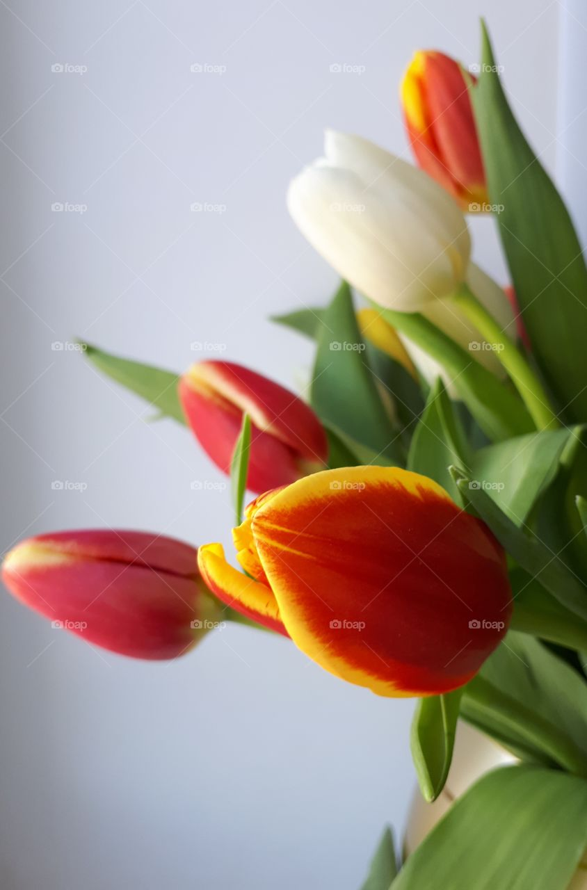 tulips in avase