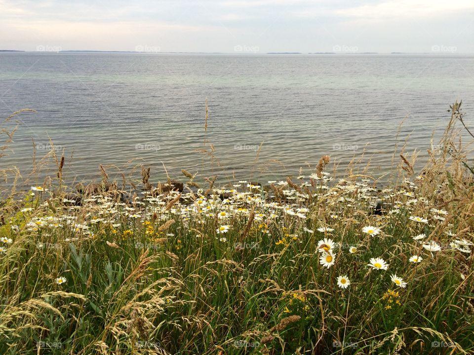 Flora- Sea