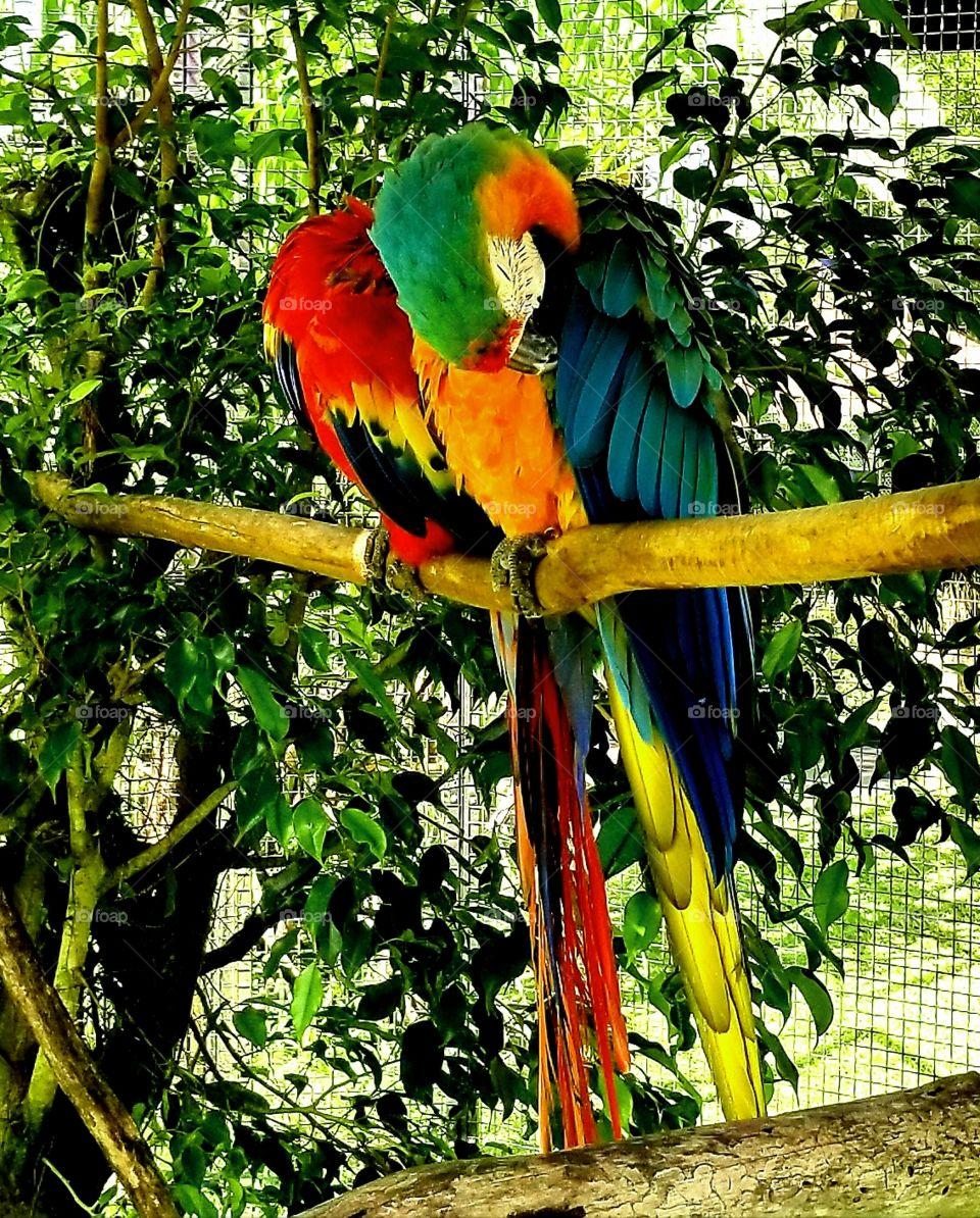 2 Parrots at zoo