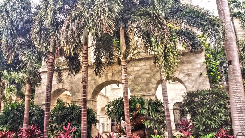 Row of palms in front of this wealthy architecture.Rihanna's pad..one sandy lane. Barbados