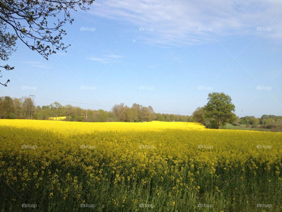 sweden sommar natur himmel by lasse