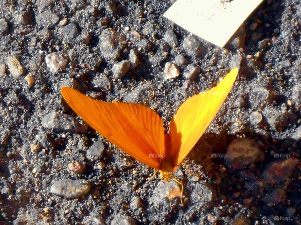 Sunglow Wing