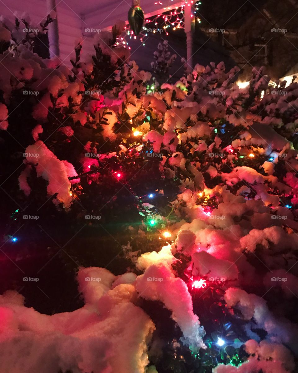 A beautiful strand of colored Christmas lights lighting up a snow-covered bush on a cold winter evening.
