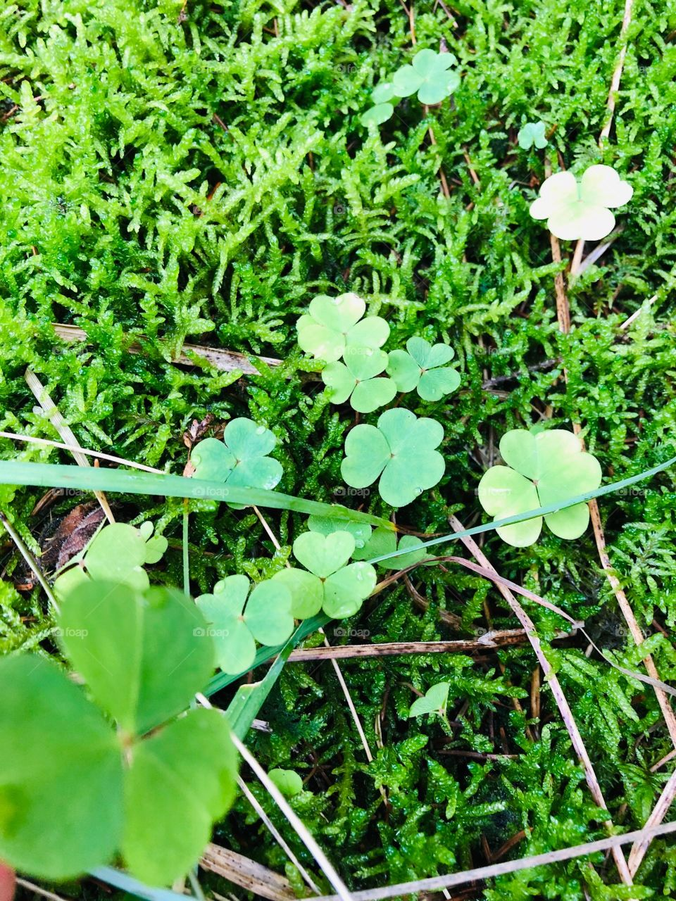 Genieße die kleinen Dinge sie machen das Leben großartig. Kleeblatt - Freude - Glück - leben - grün - Wiese - Glücksbringer 🖤