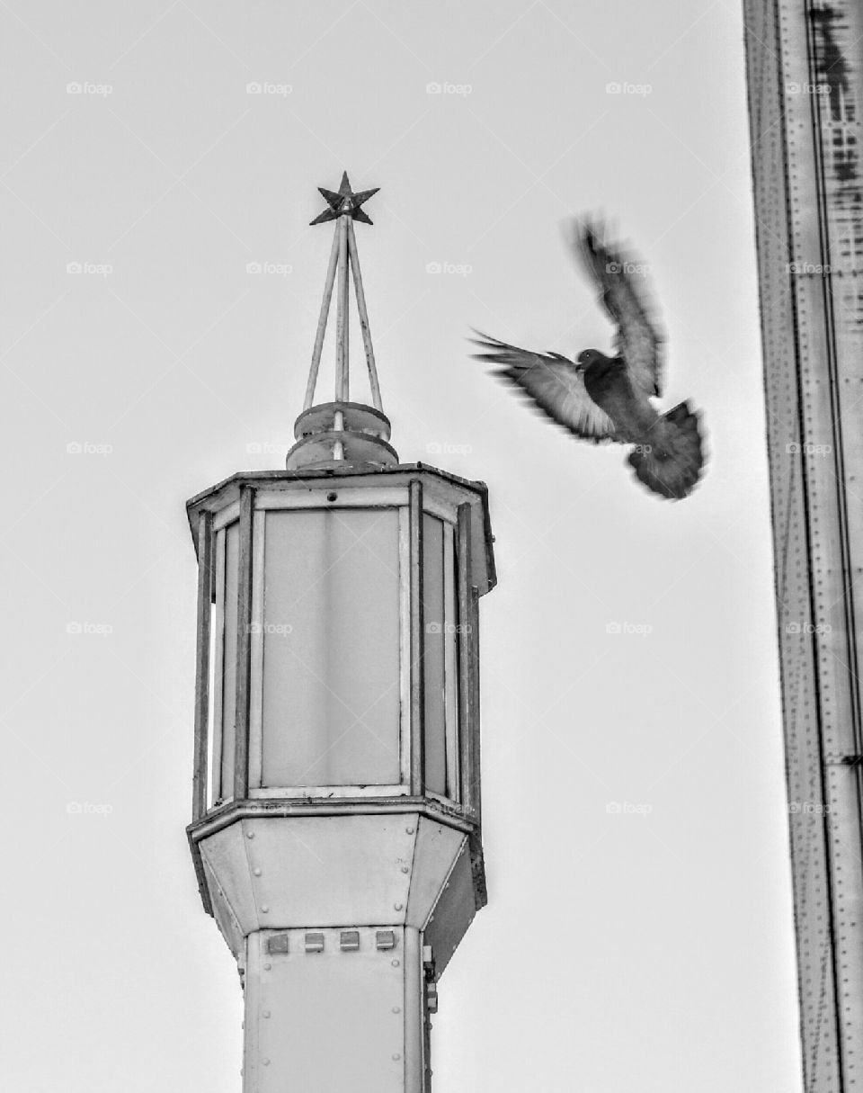 black and white bird lamp post