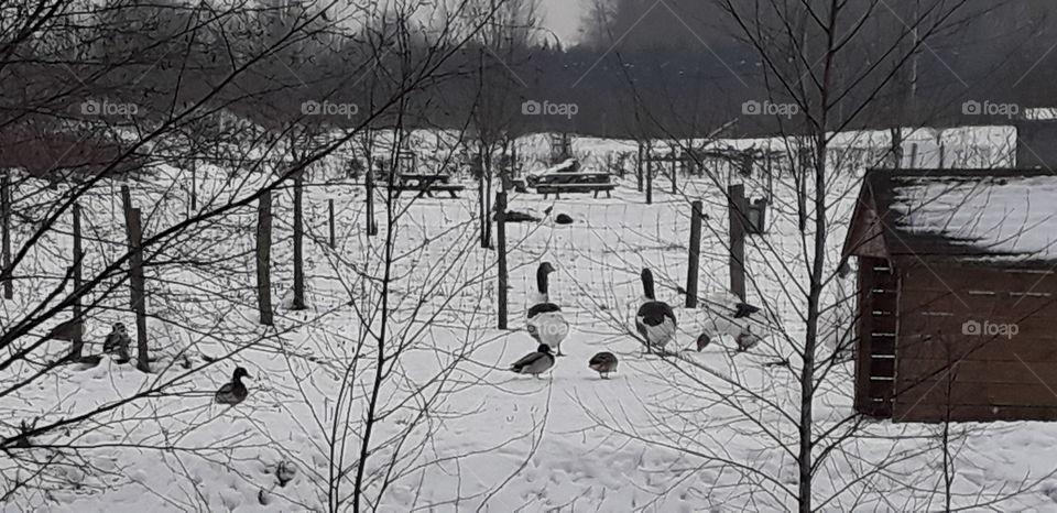 Jars dans la neige
