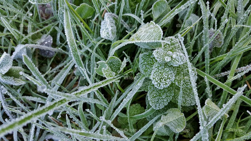 High angle view of frost leaf