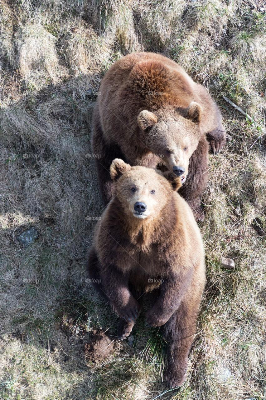 High angle view of two bears