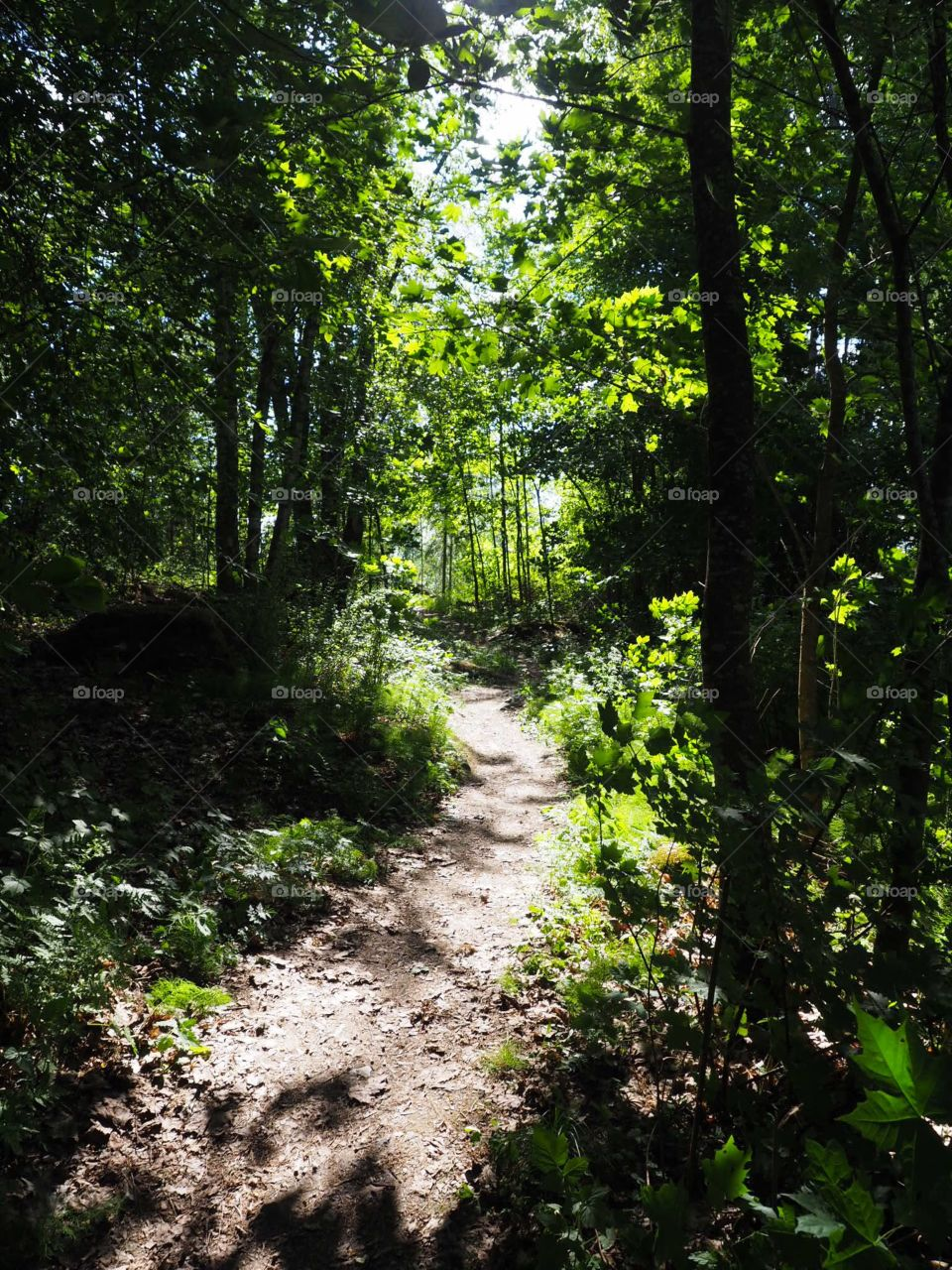Forest path surrounded by green branches.