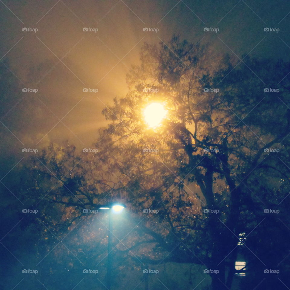 Bright Light in a Tree at Night