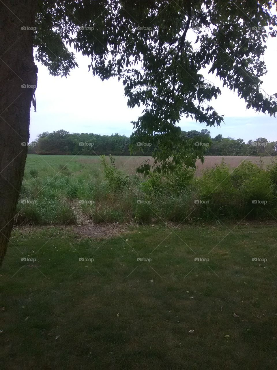 anybody else just wanna run through this field and feel free .