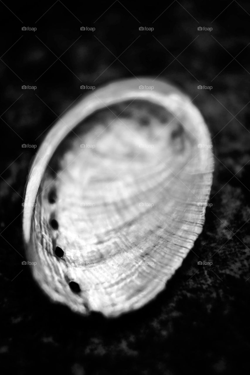 This is from a black and white visual study of shells I'm still working on.