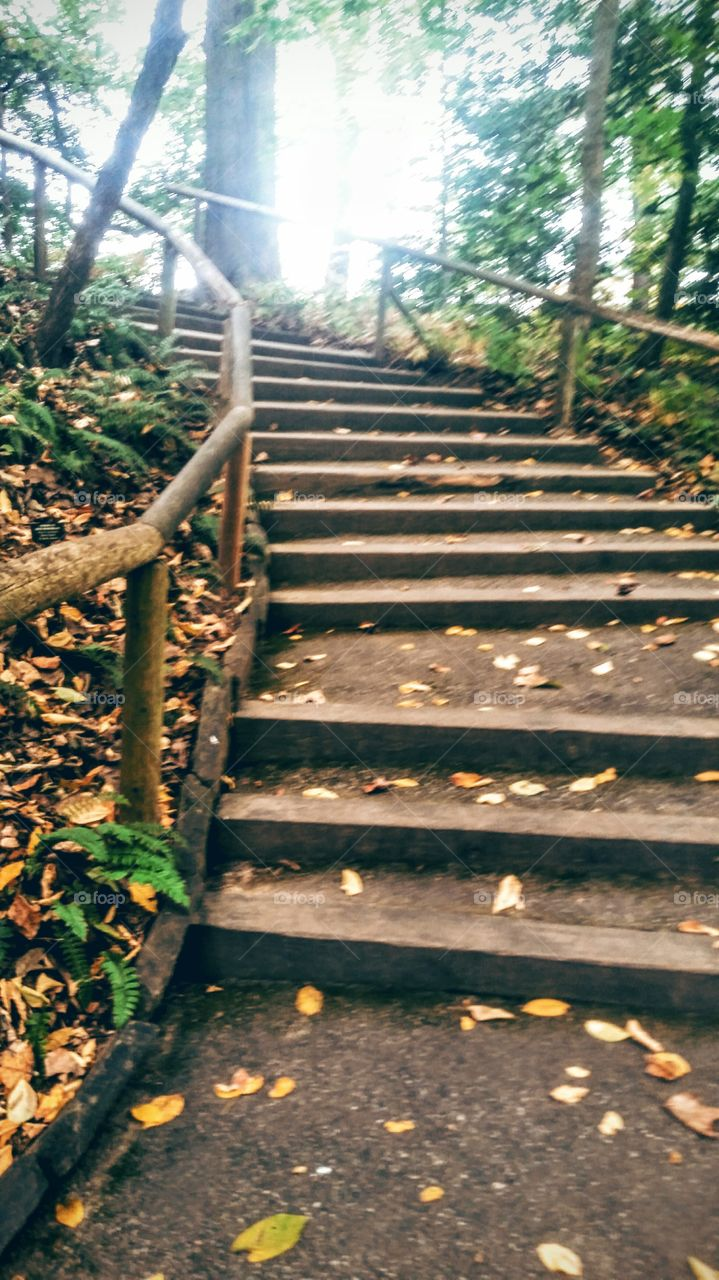 Empty staircase in forest