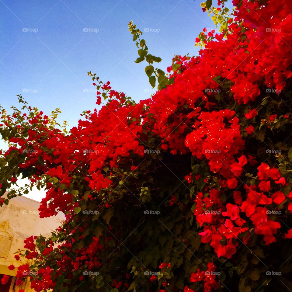 Beautiful flowers I spotted in Naxos Old Town