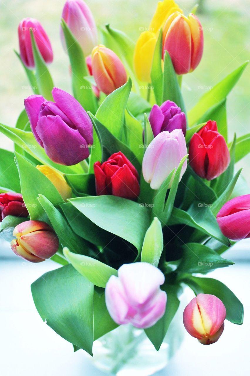 Full frame of tulip flowers