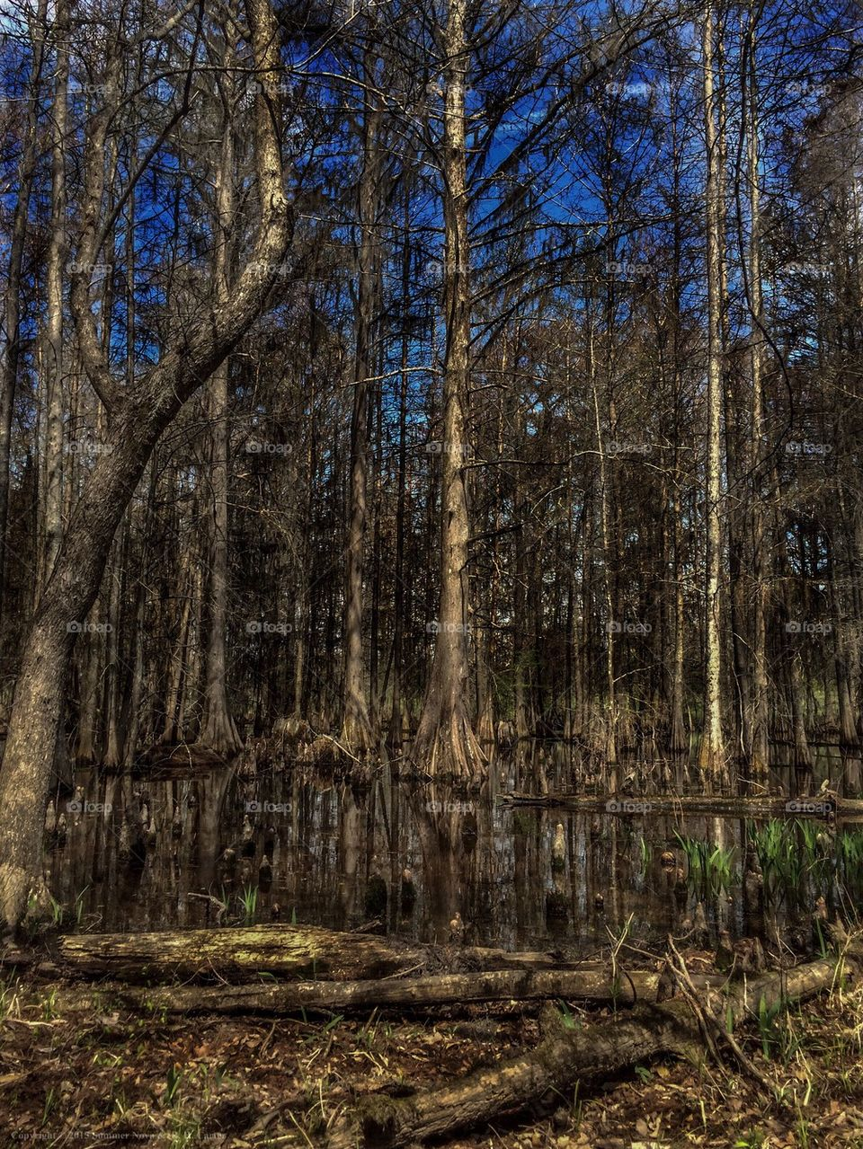 Swamp In March