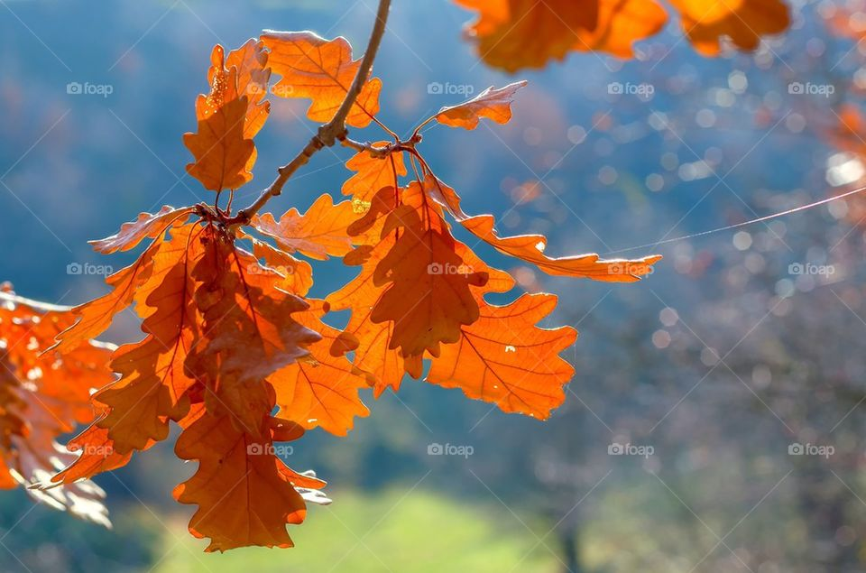 Tree branch with autumn leaves