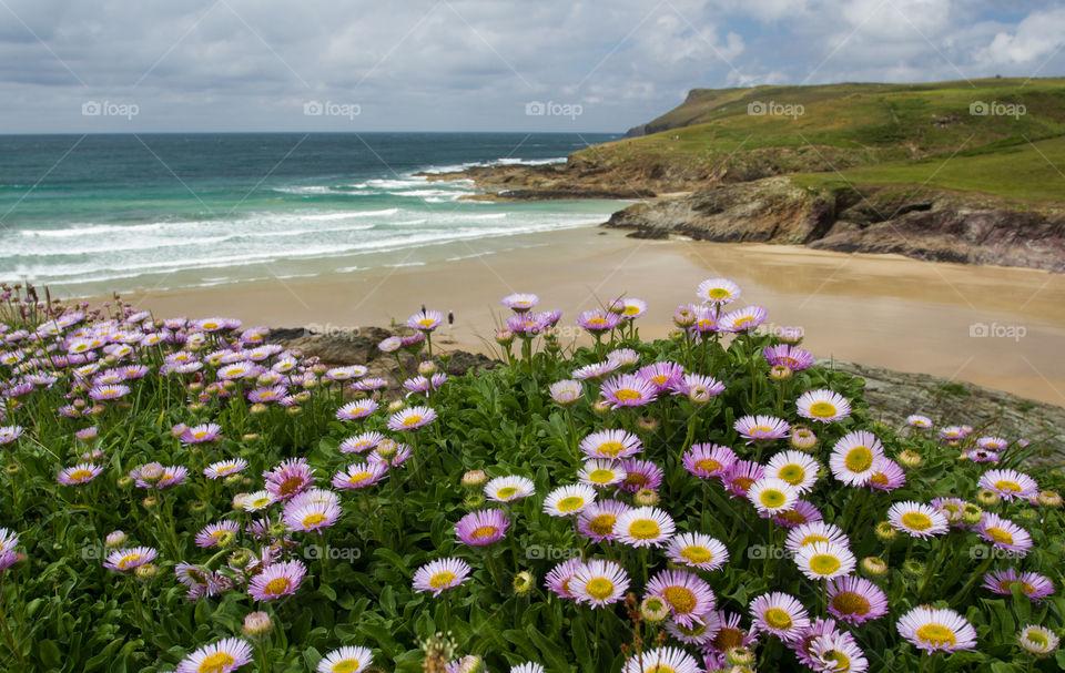 Wildflowers near beach