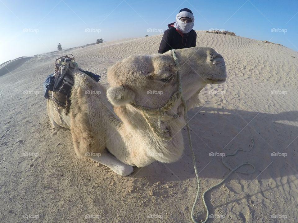 Camel ride in the Sahara desert