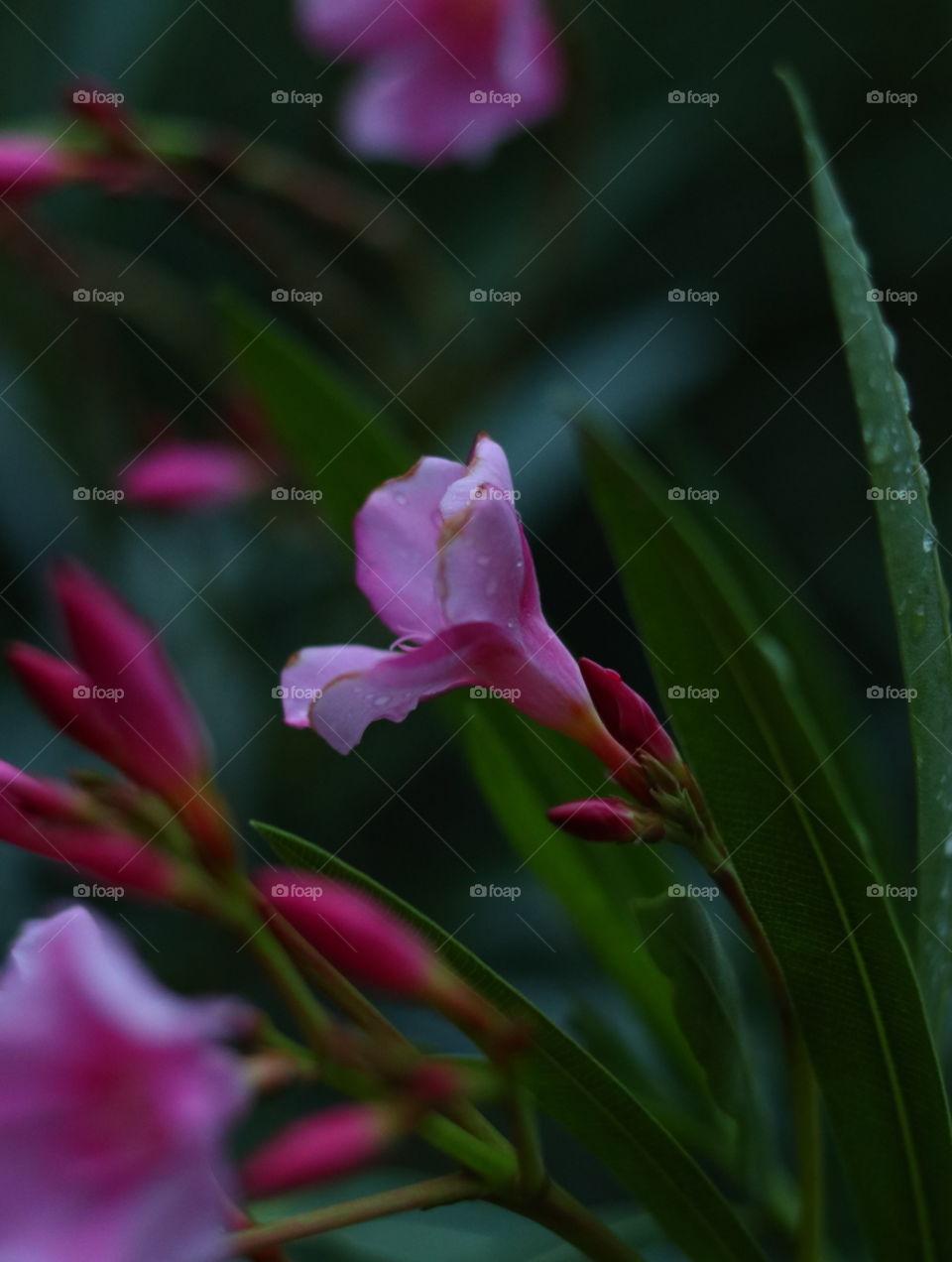 lovely flower closeup