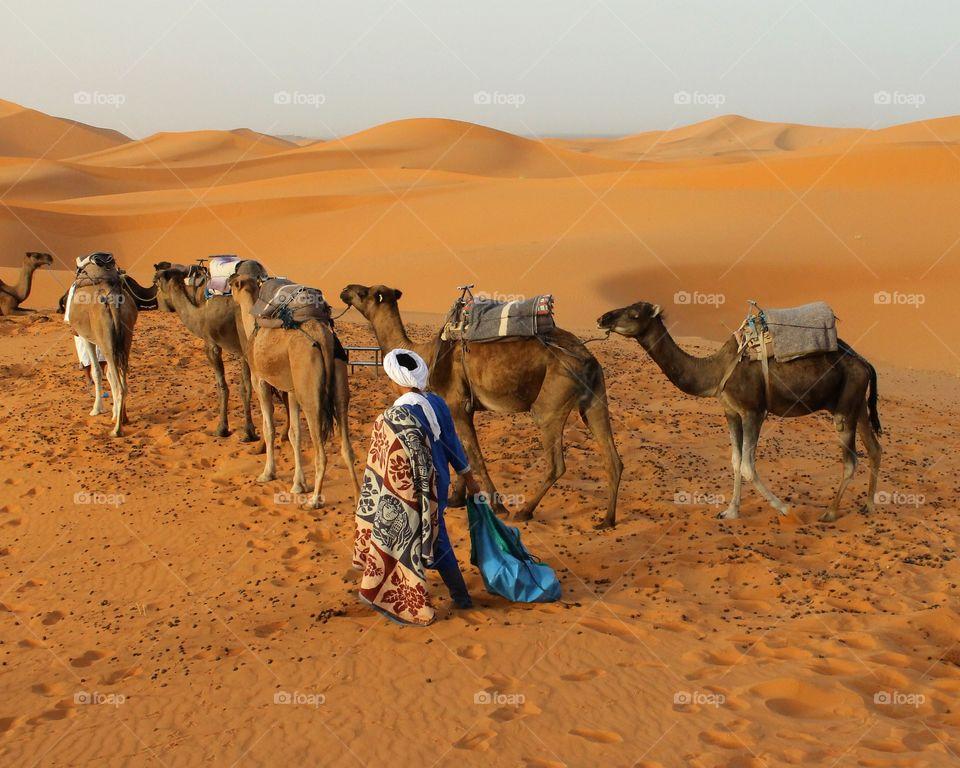Desert. Morocco