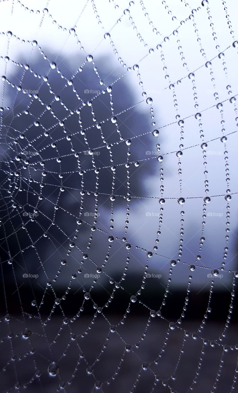 Spiderweb in the morning fog