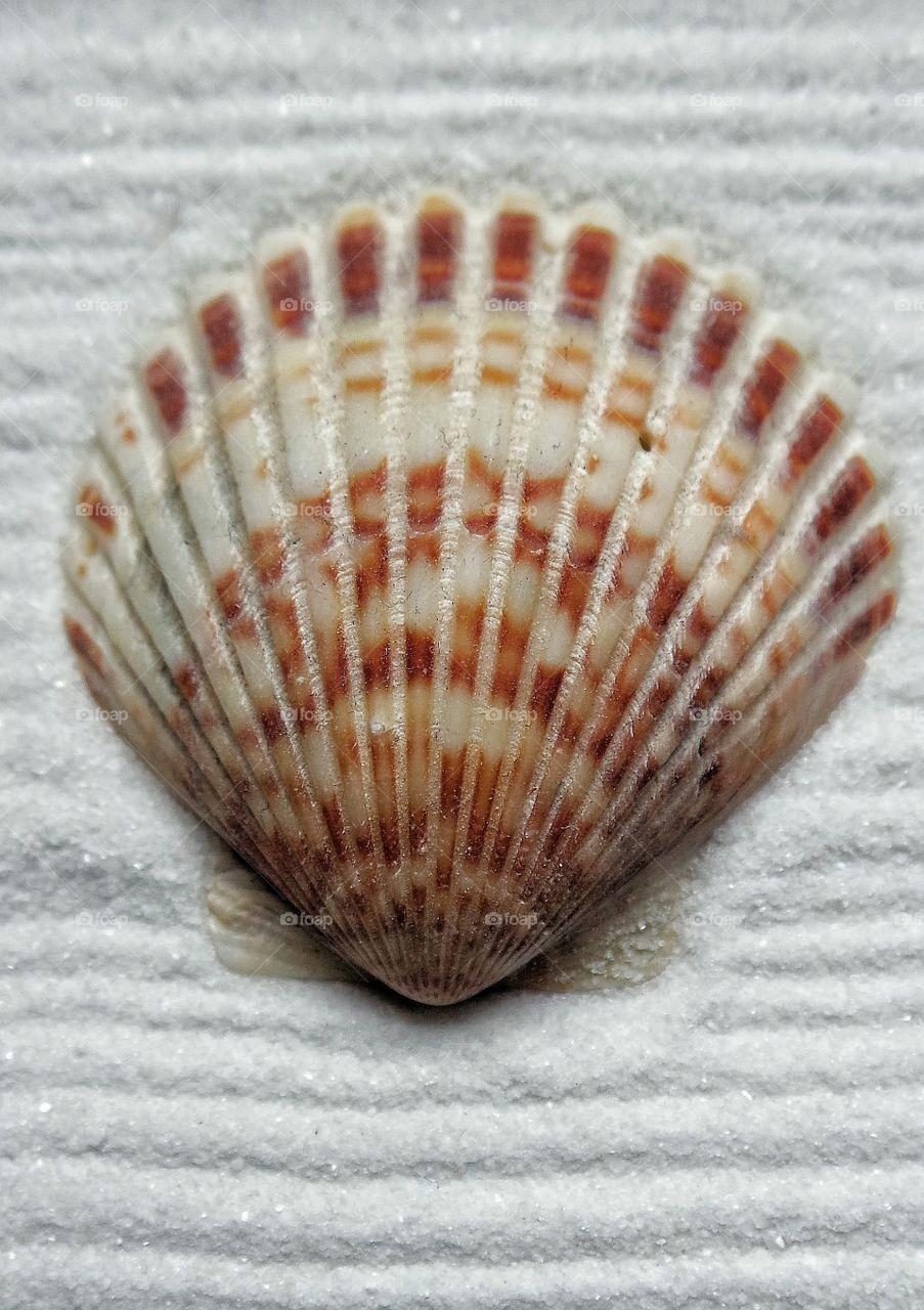 Shell  on sandy beach