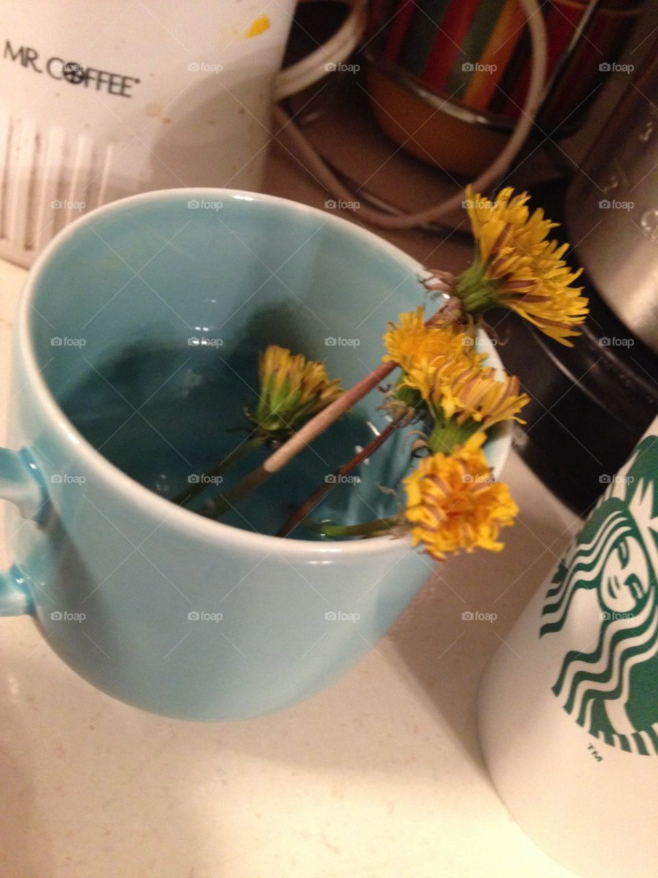 Dandelions Come Home . Dandelions in a teacup