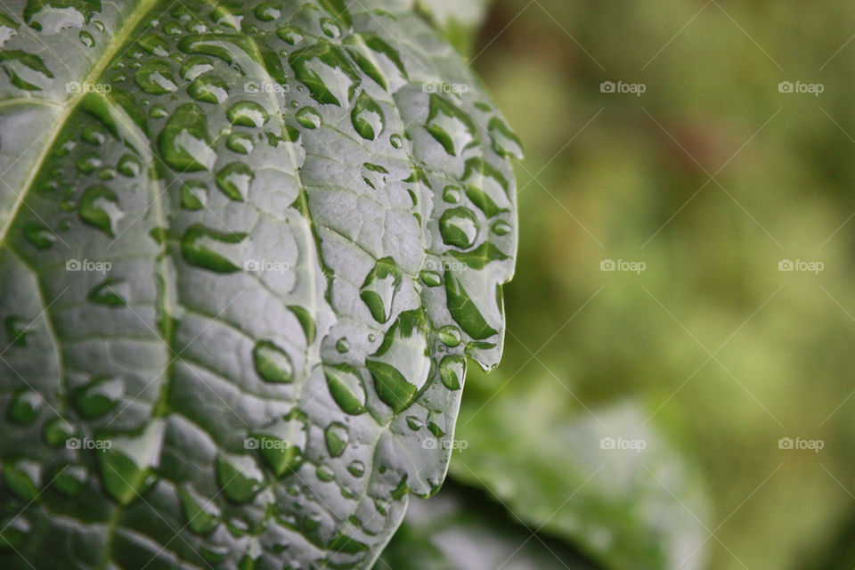 green water leaf rain by dervoss