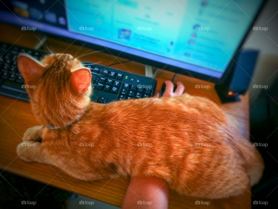 Cat sitting on owner's arm.