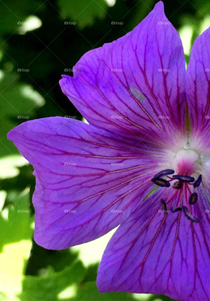 Lots of texture in a purple flower's petals