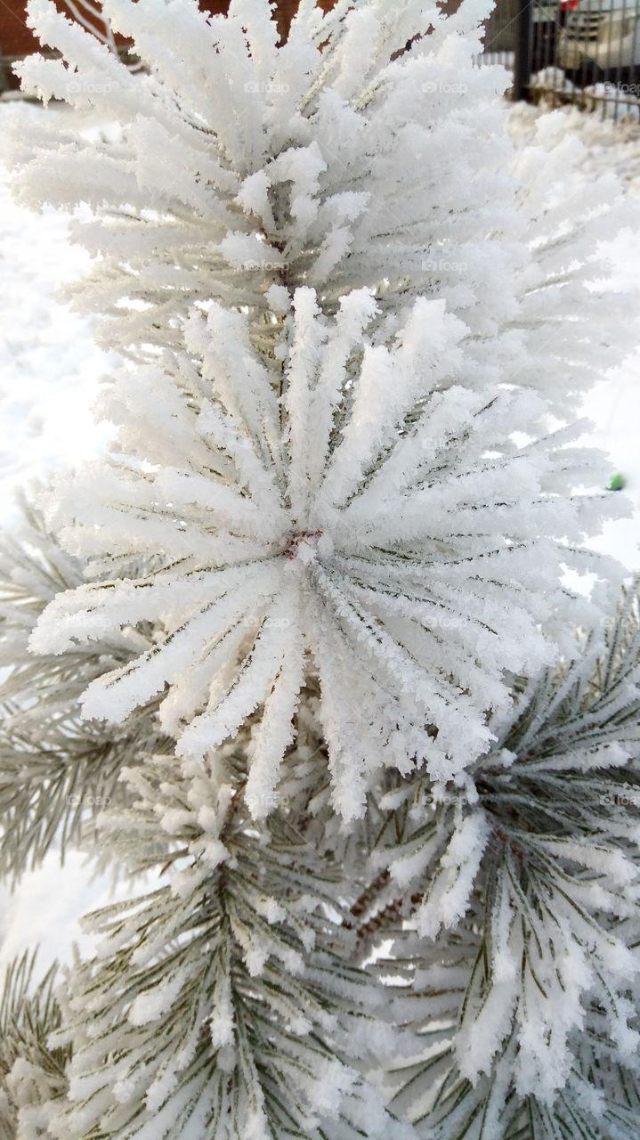 зима.снег.новый год.