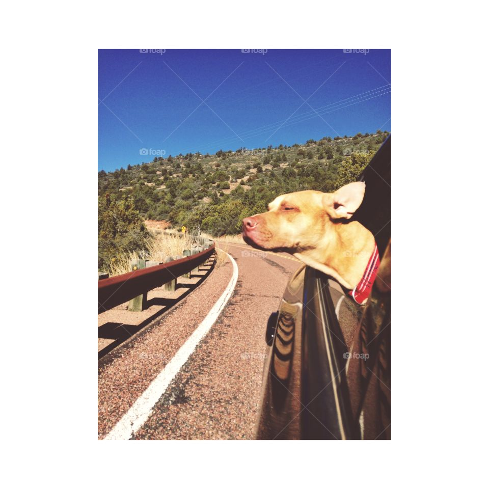 Blissful dog
