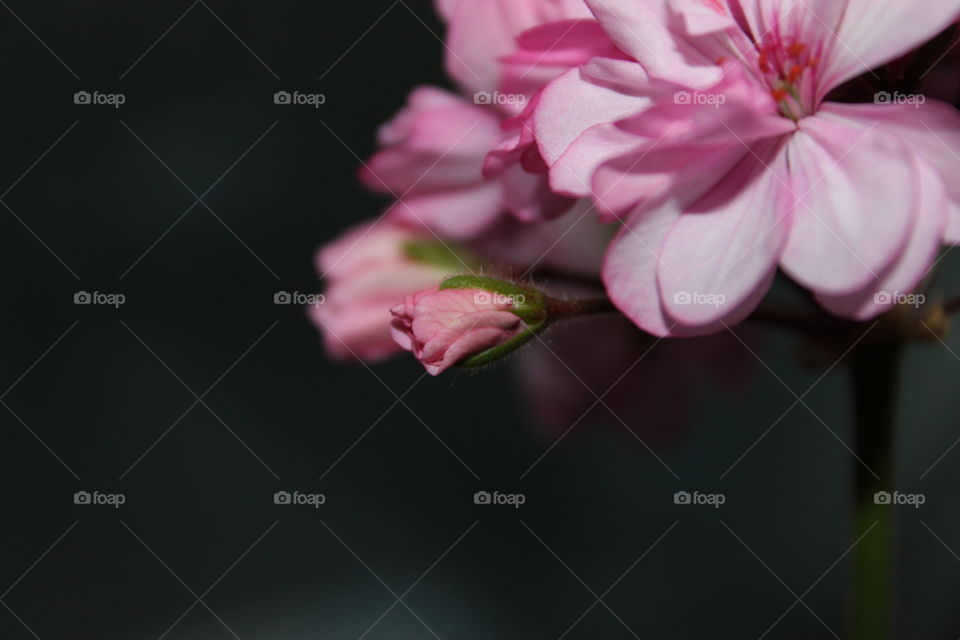macro shot flowers