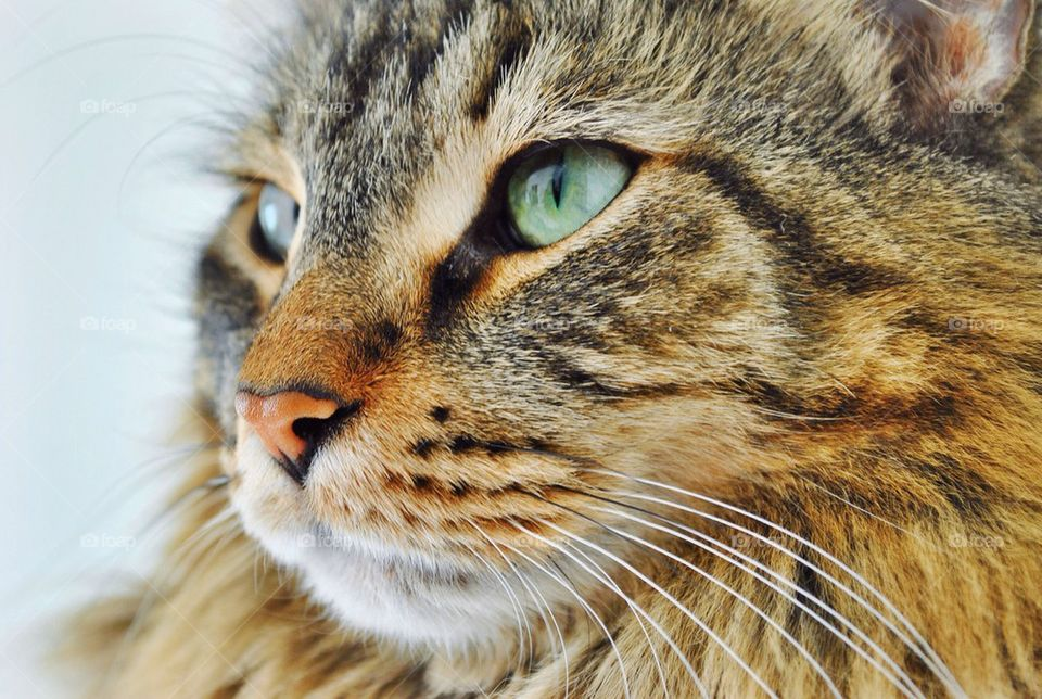 Extreme close-up of cat head