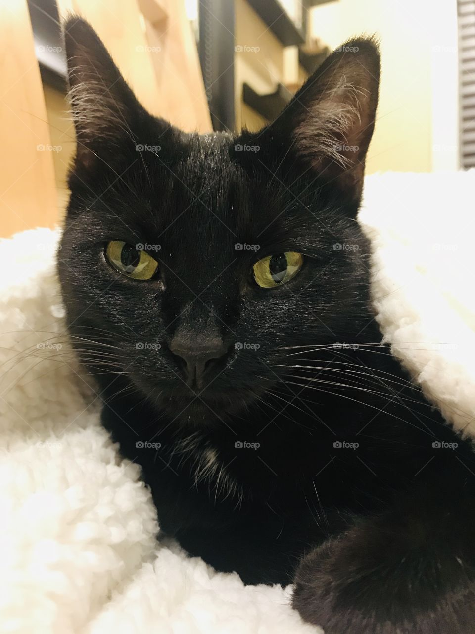 Fun photo with darling black kitty cat laying completely cuddled up in cozy white blanket!!