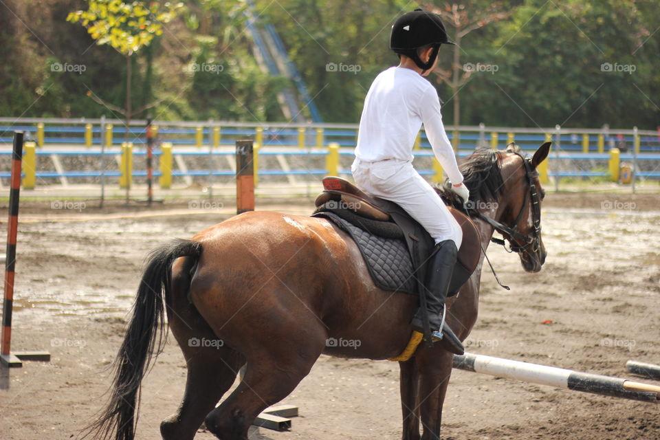 kuda adalah teman manusia sejak jaman dulu