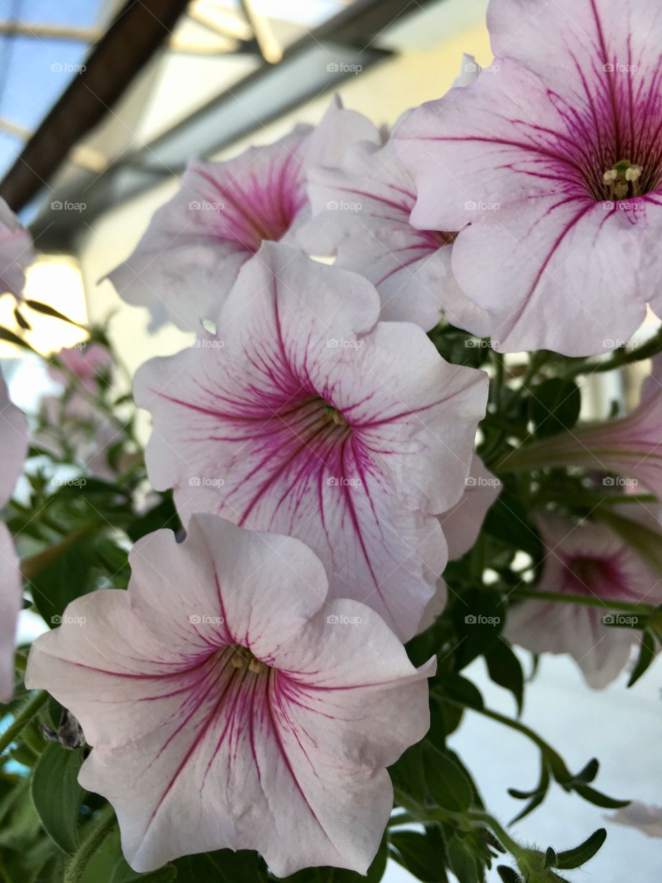 Beautiful white and pink flowers blooming