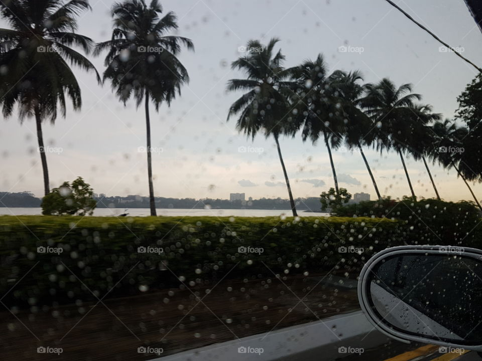 palm trees in a row from car on rainy day