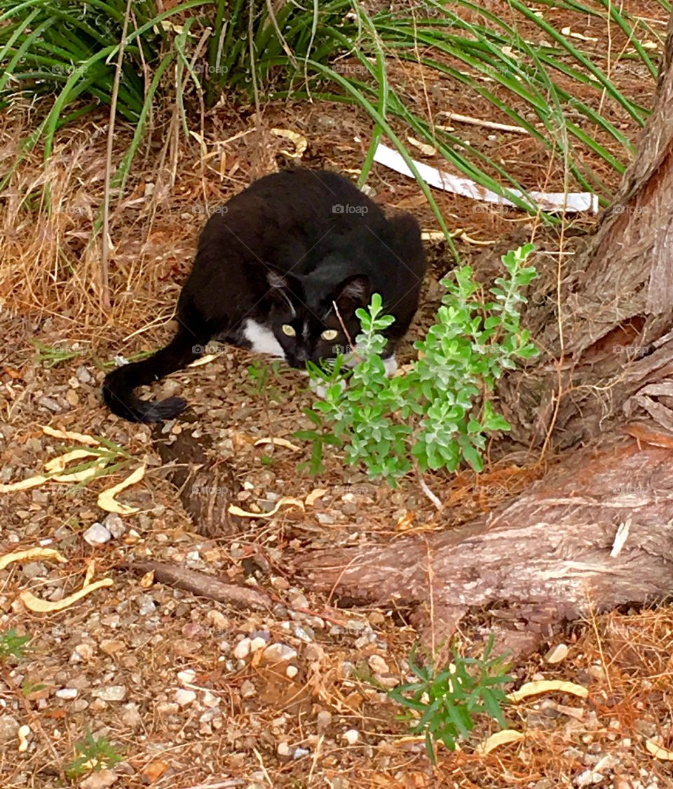 Black cat with bright eyes prepares to pounce, surrounded by tall plants, tree, rocks