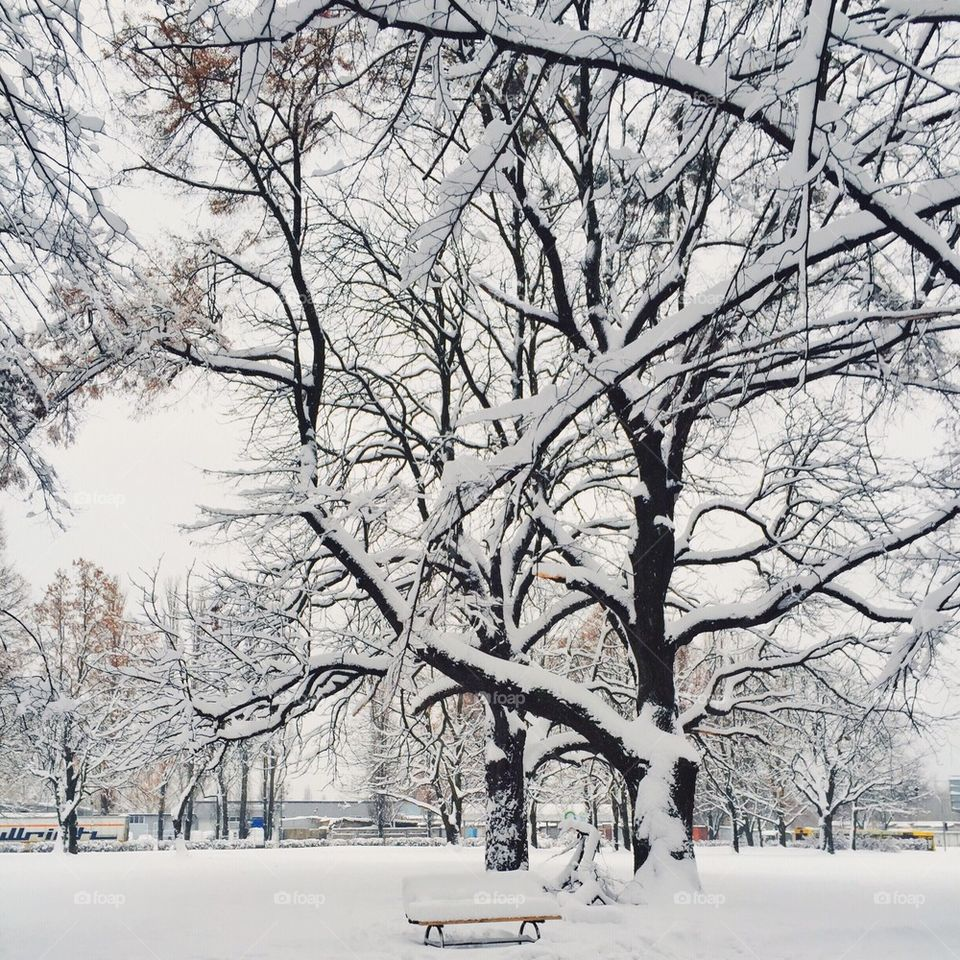 Winter in the city park