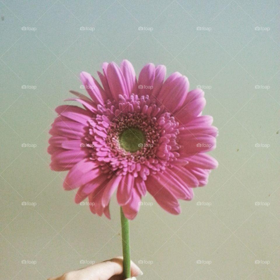 pink lone flower. as i say my last goodbye to my grandma