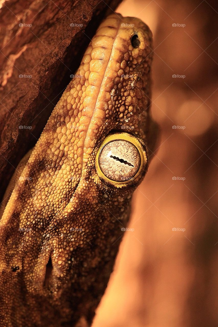 yellow nature eye brown by samuel.andersen