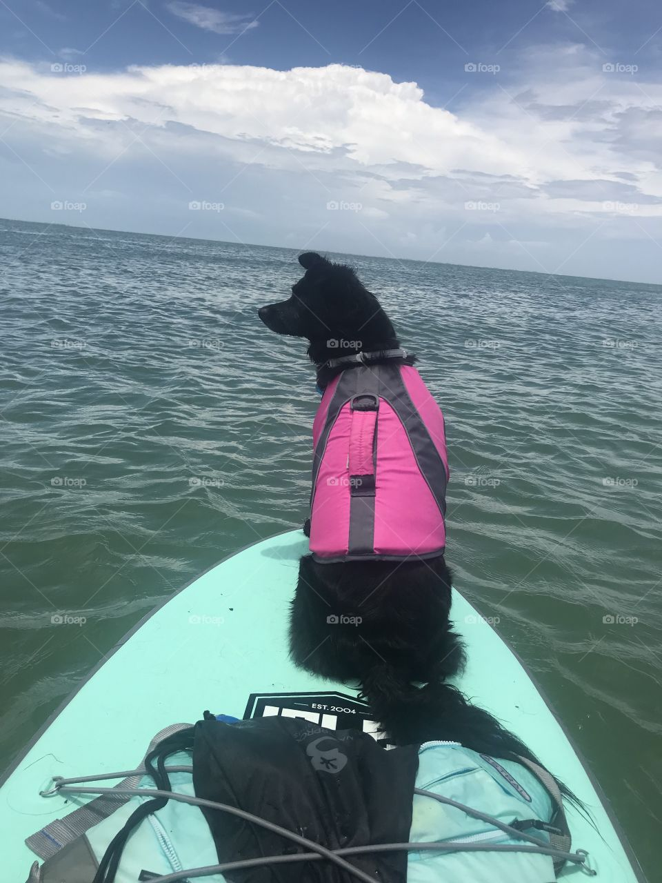 Ocean Paddle Boarding