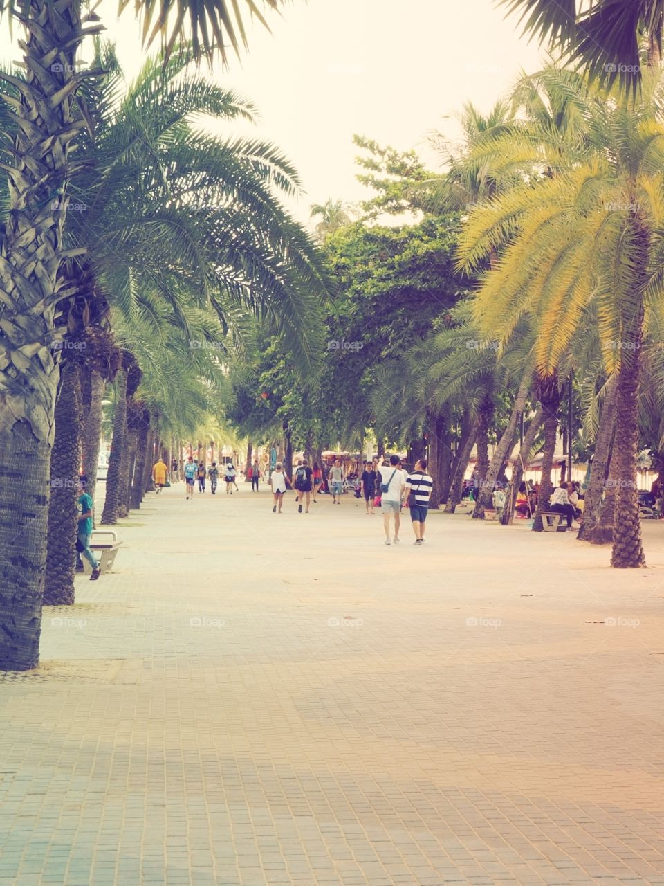 People walking on the beach walk surrounded with green palm trees.