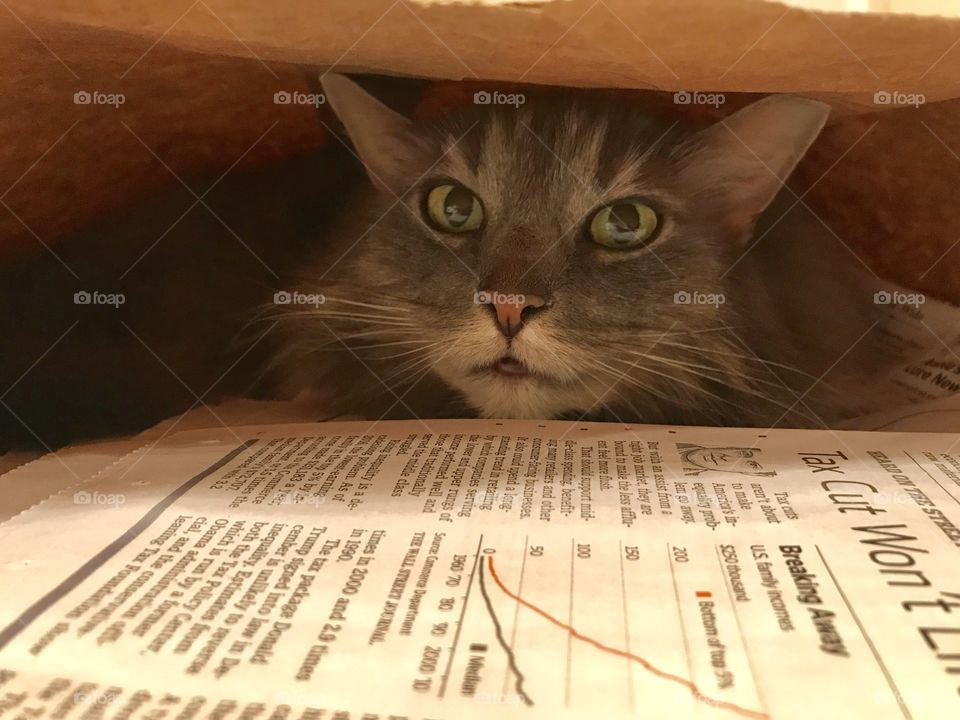 Hiding in the newspapers