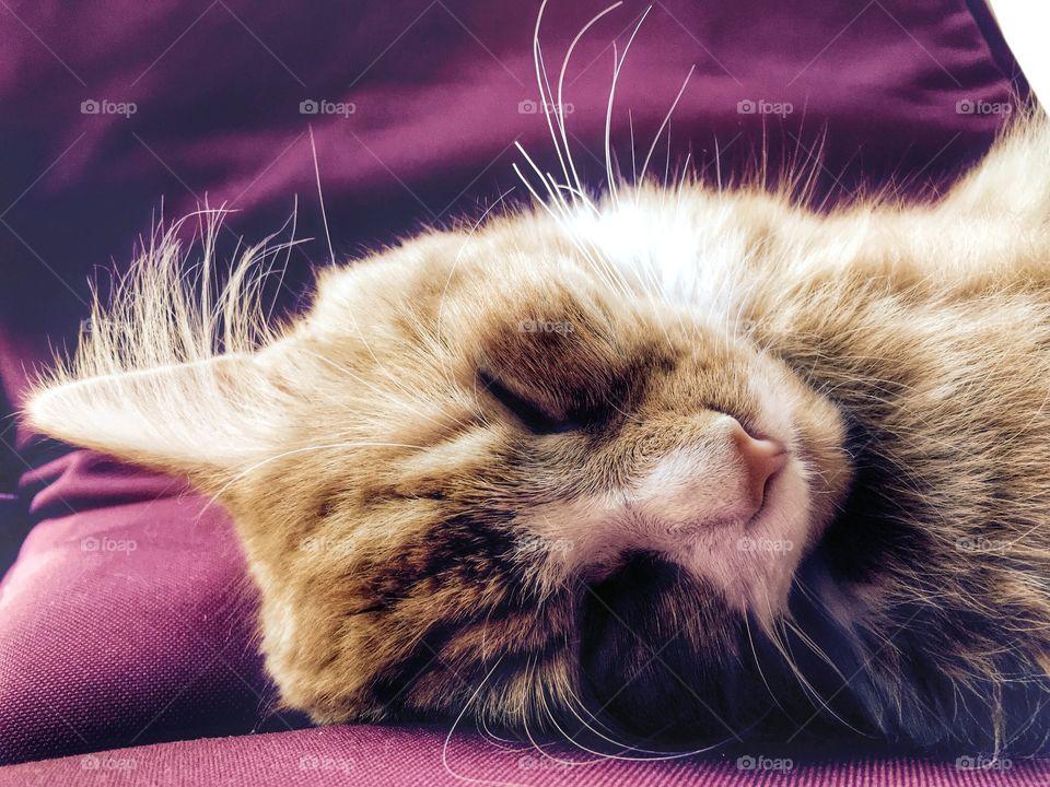 Sleepy time ;) Z z z z . Thomas Sleeping