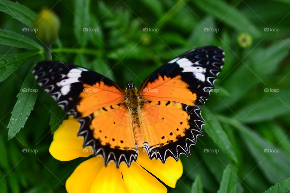 Overhead view of butterfly on flower