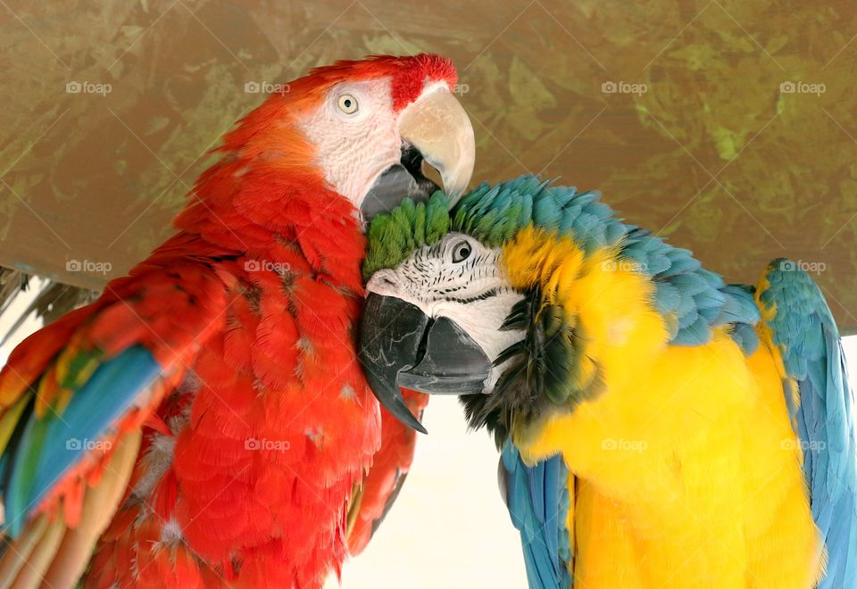 Colorful couple of birds