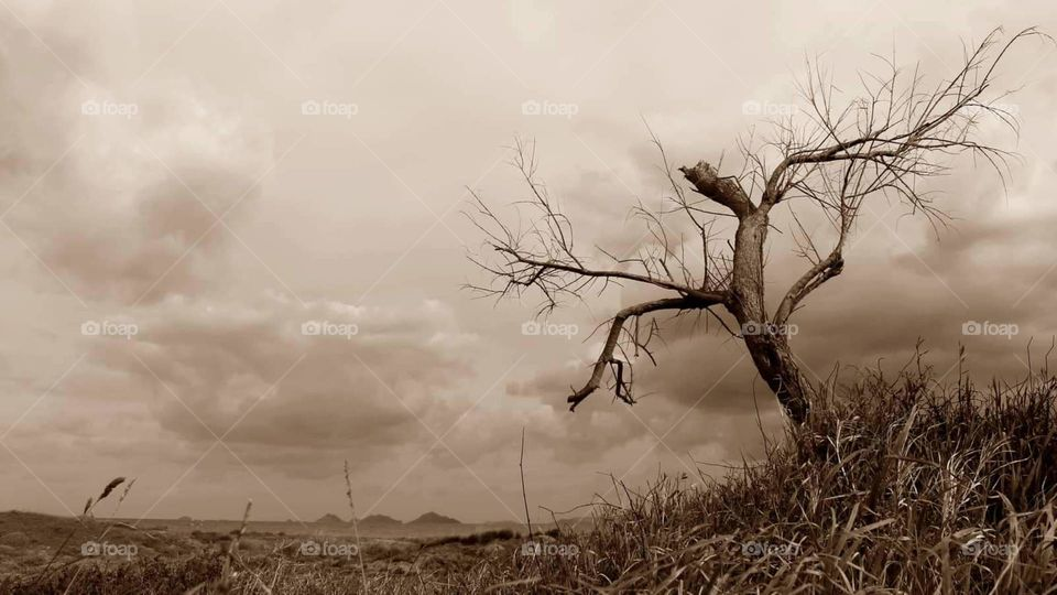 #dry tree #pollution #environment #danger #clouds #dry grass #fire